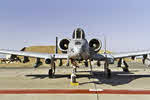 Nose view of A-10 of 104th Fighter Wing, Iraq 2003 (1 of 2)